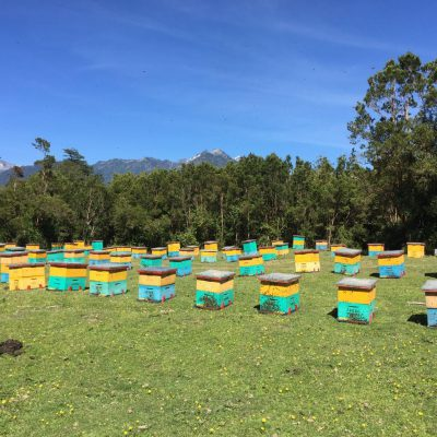 Beehives in Chile
