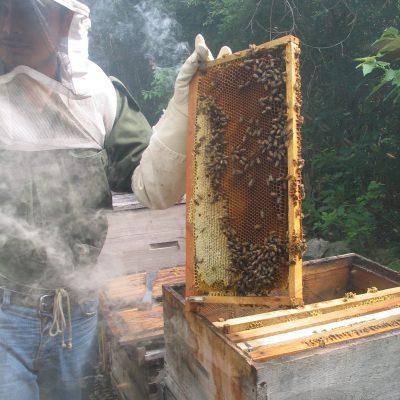 Bio-Imker bei der Arbeit in Yucatán