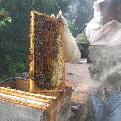 Organic Beekeeper in Yucatan