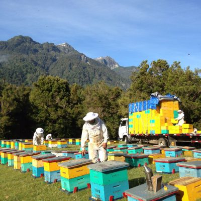 Organic beekeepers at the regular control