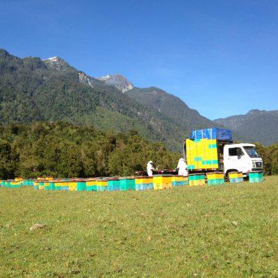 Apiculteurs biologiques au Chili